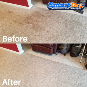 If you have kids or animals in time you are going to need to deal with stains on your carpets, upholstery or furniture. Even if you don't have kids or ...